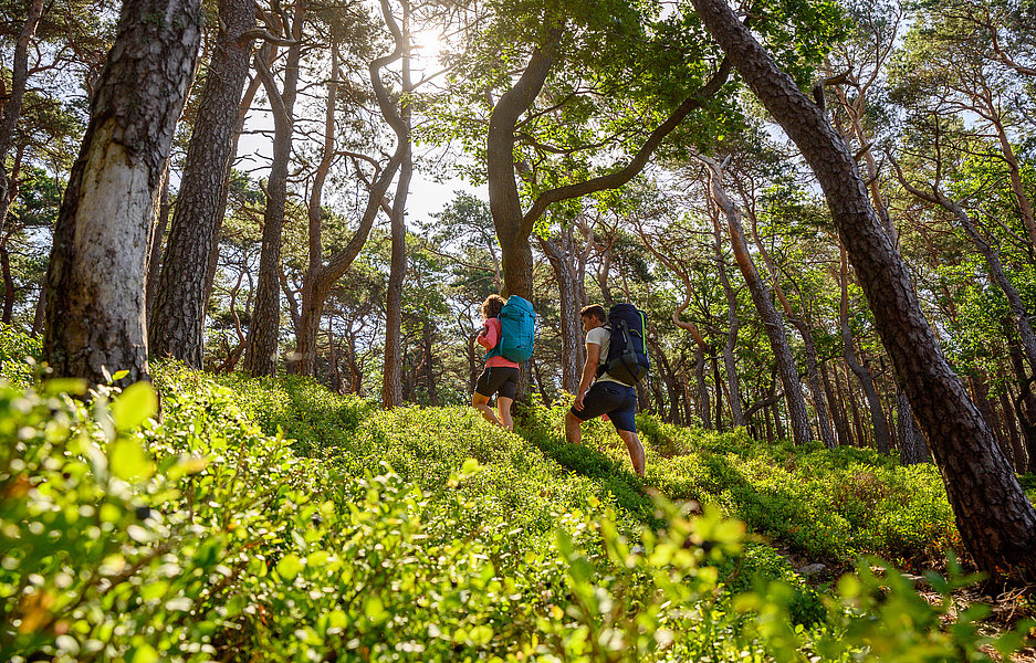 Wanderer im Pfaelzerwald